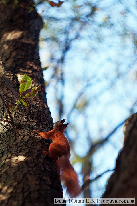 Squirrel and Bokeh