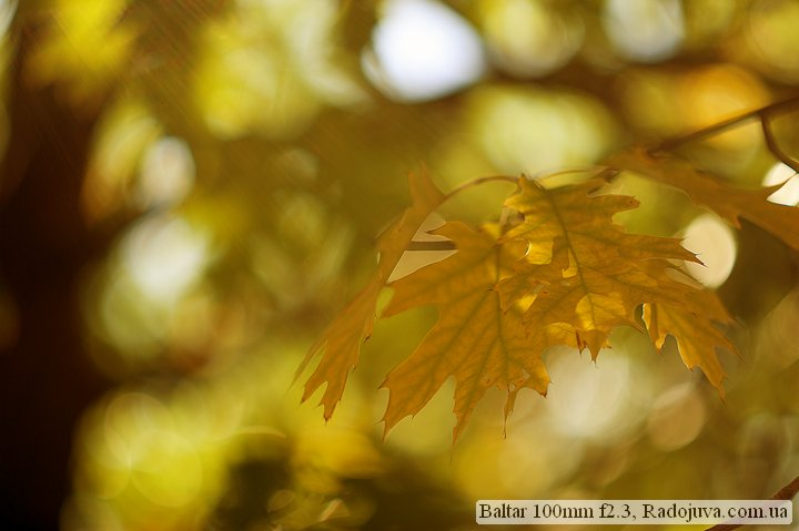Photo at Baltar 100mm f2.3. Autumn in the yard, leaves