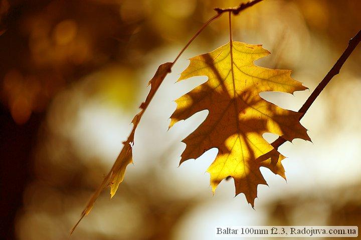 Photo at Baltar 100mm f2.3. Autumn leaf