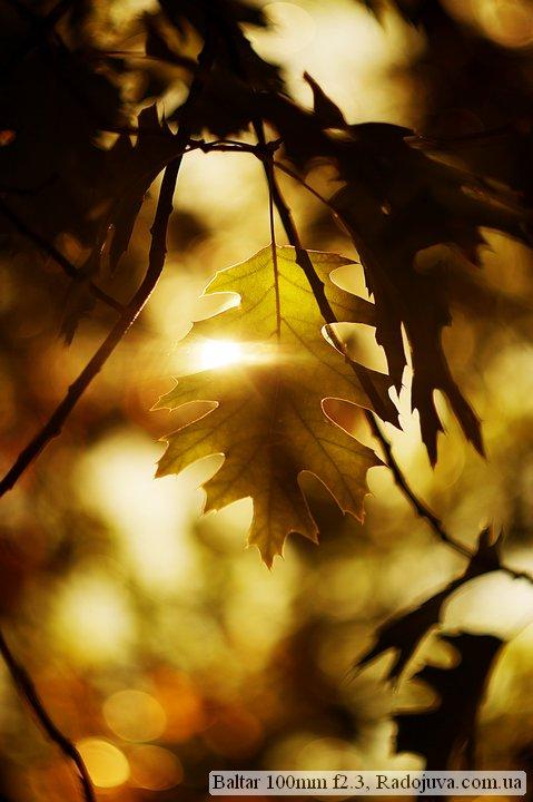 Photo at Baltar 100mm f2.3. Autumn leaf in the sun