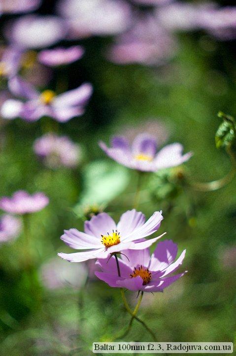Photo at Baltar 100mm f2.3. Flower in focus