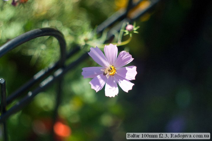 Photo at Baltar 100mm f2.3. Focus on the flower. The picture is clearly visible