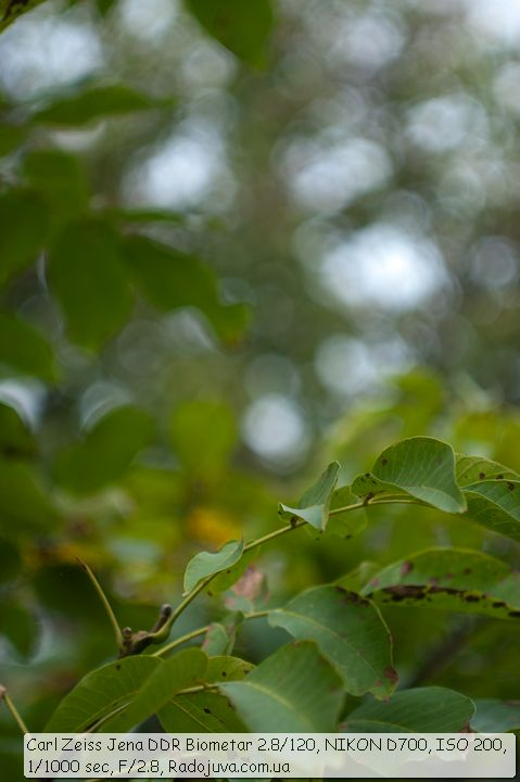 Пример фото на Biometar 2.8 120