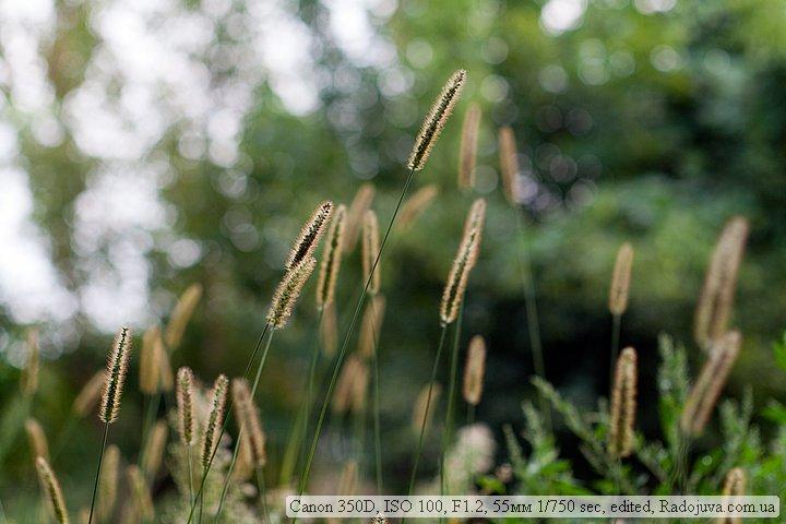 Пример фото на Canon 350D