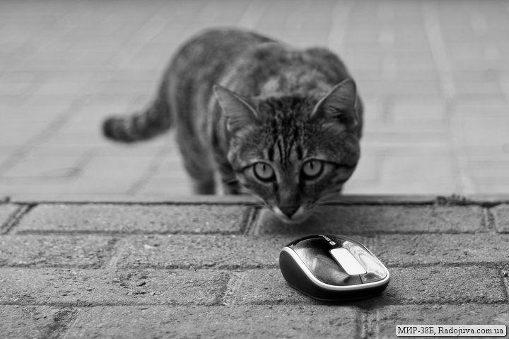 Мышка Microsoft Sculpt Touch Mouse Souris tactile - как живая
