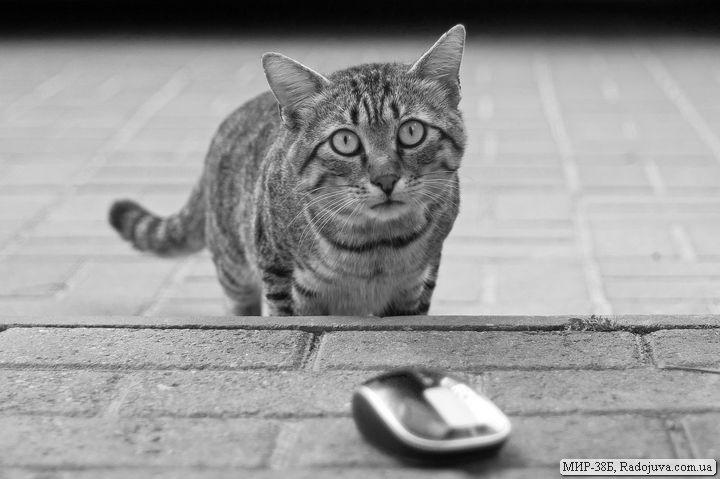 Мышка Microsoft Sculpt Touch Mouse Souris tactile - как живая, но без хвоста