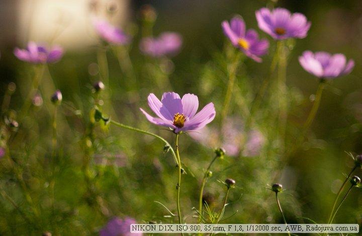 Фотография на Nikon D1x
