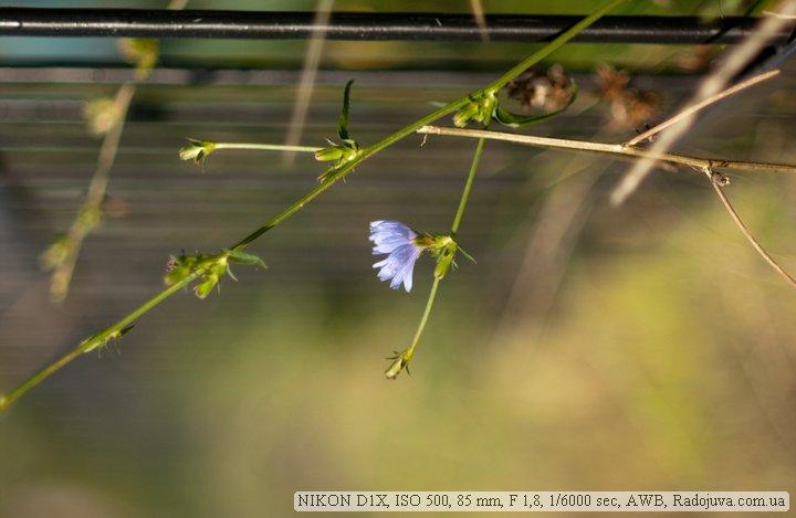 Пример фотографии на Nikon D1x