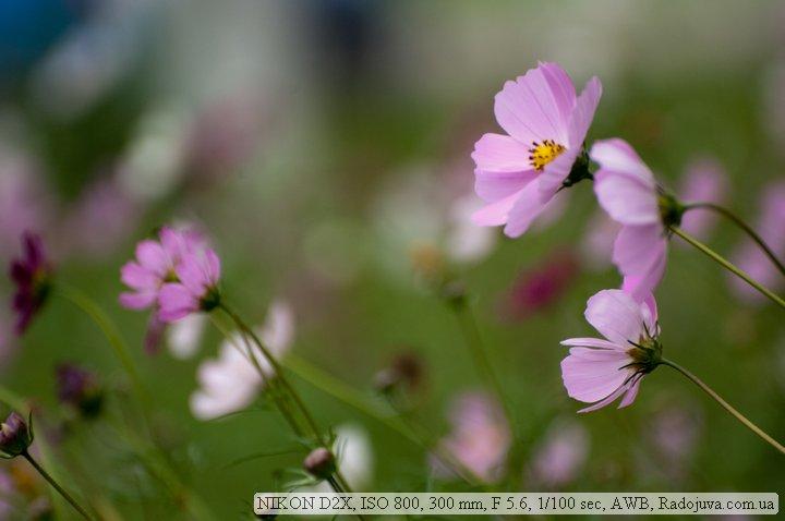 Пример фото на Nikon D2x