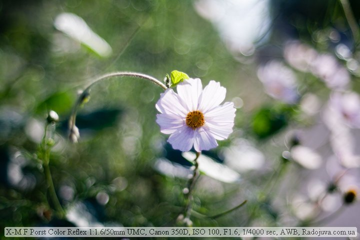 Sample photo on Porst Color Reflex 1.6 50mm