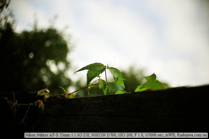 Листики на Nikon 35mm F1.8G DX и полный кадр