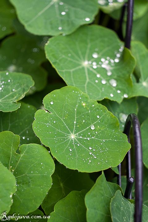 Капли дождя на листьях