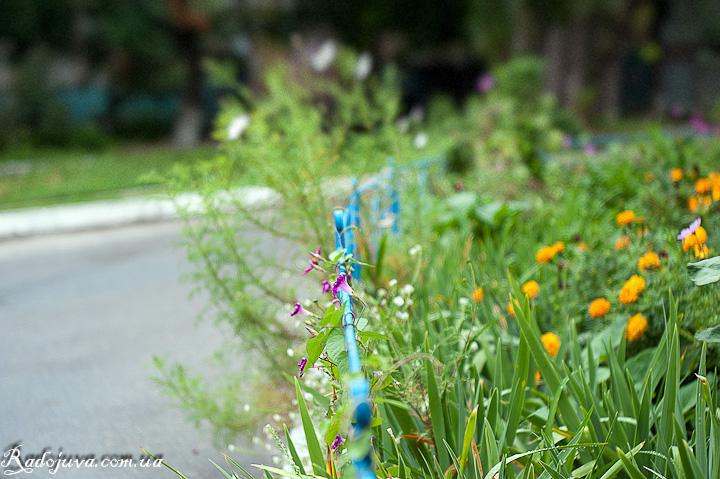 Осень и цветы