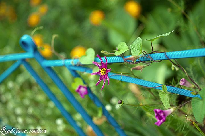 Осень и цветы 2