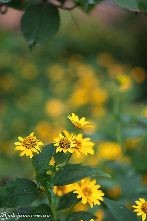 Больше цветов