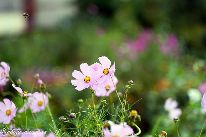 Цветы и пчелка