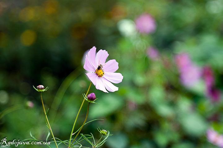 Цветок и пчелка