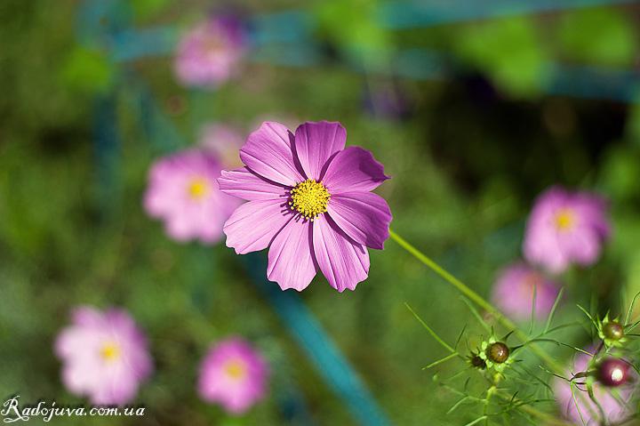 Цветок, который много фотографировался