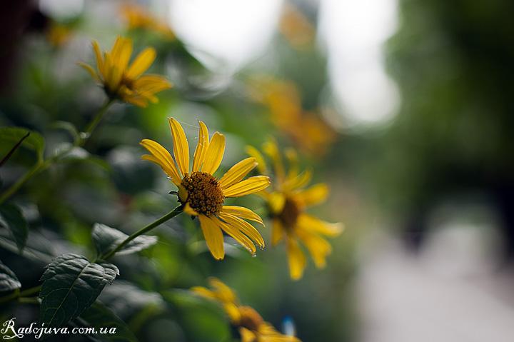 Цветок и боке