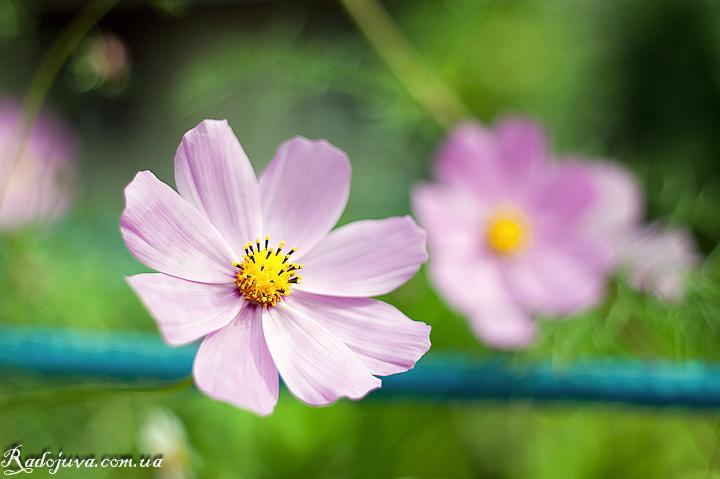 Мой любимый цветок с данной акции