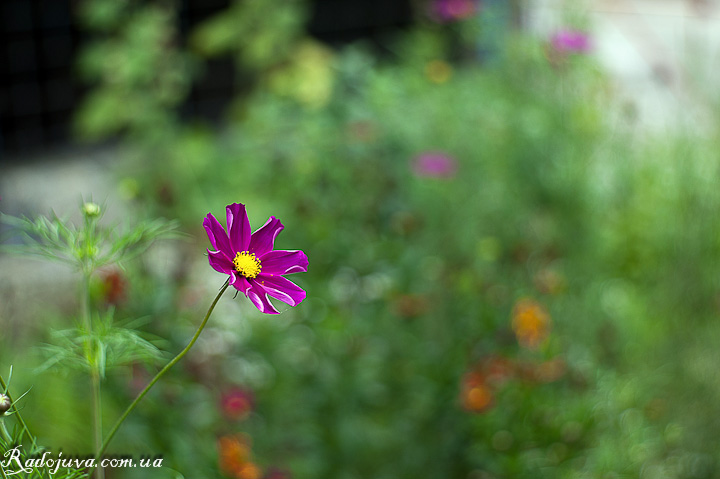 Еще один цветок