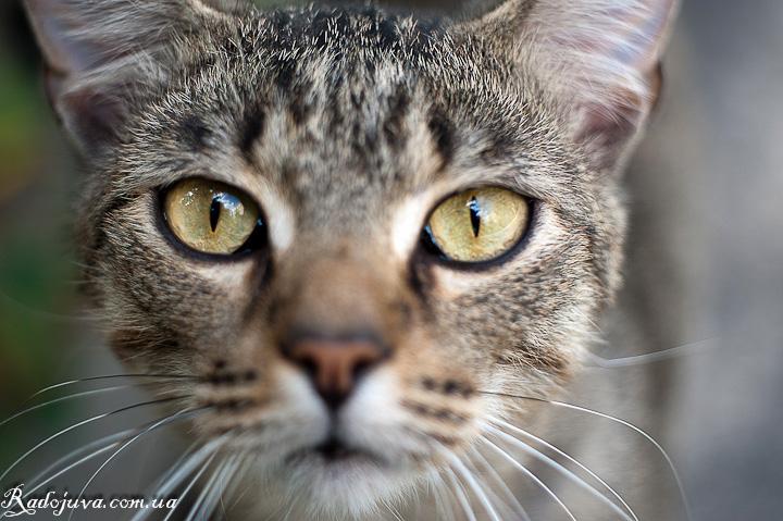 Фотография кота