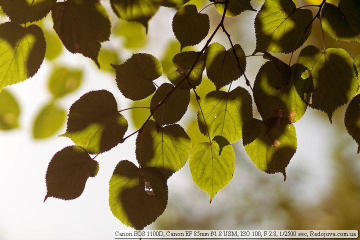 Пример фотографии на Canon EOS 1100D