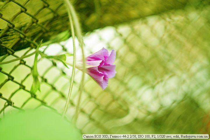 Пример фотографии на Canon 30D