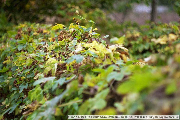 Пример фото на Canon 30D