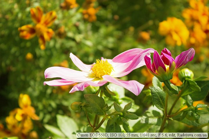 Пример фотографии на Canon EOS 550D