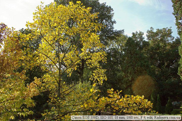 Пример фото на Canon EOS 550D