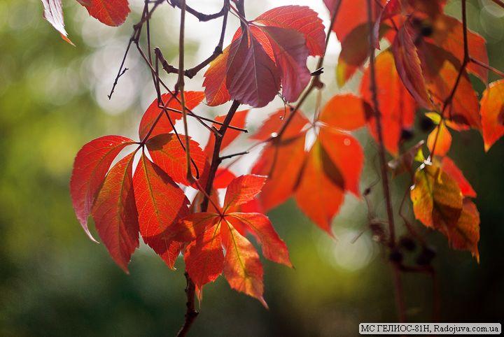 Осеннее фото на МС ГЕЛИОС-81Н