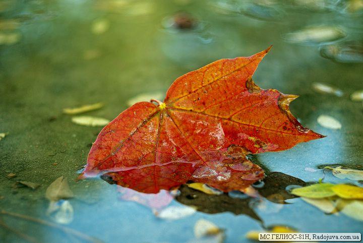 Осенний лист на МС Гелиос-81Н