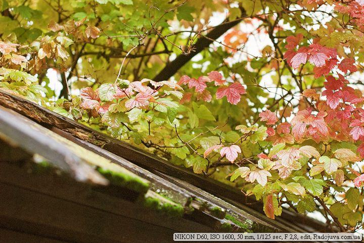 Пример фотографии на Nikon D 60