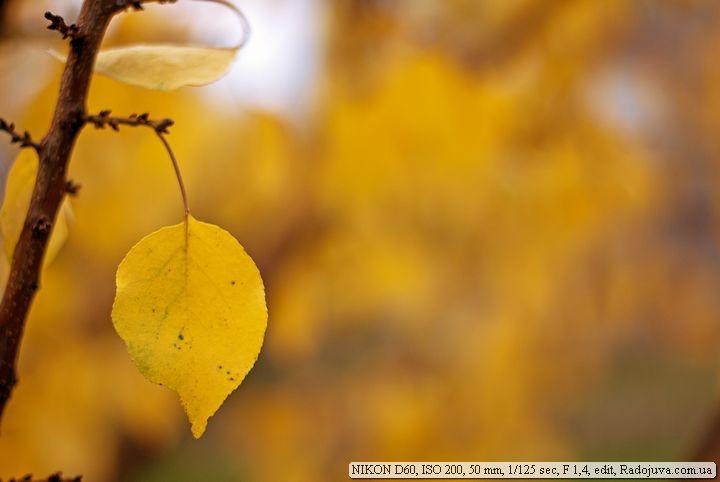 Пример фотографии на Nikon D60