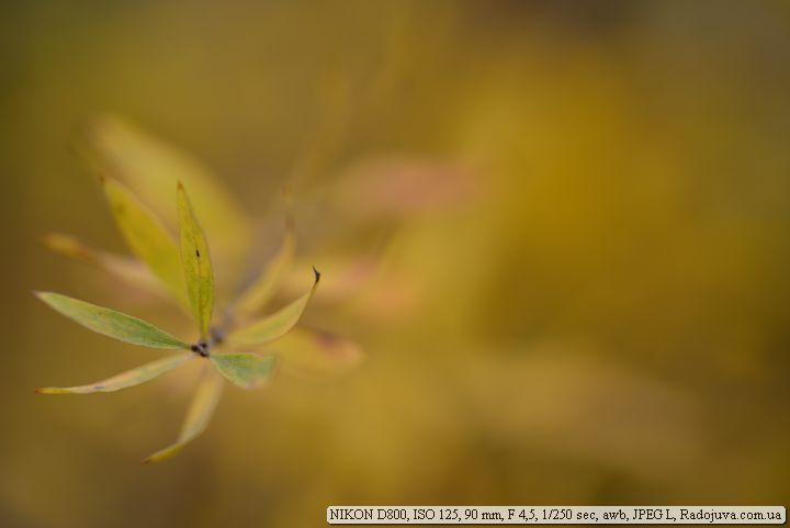 Пример фотографии на Nikon D800