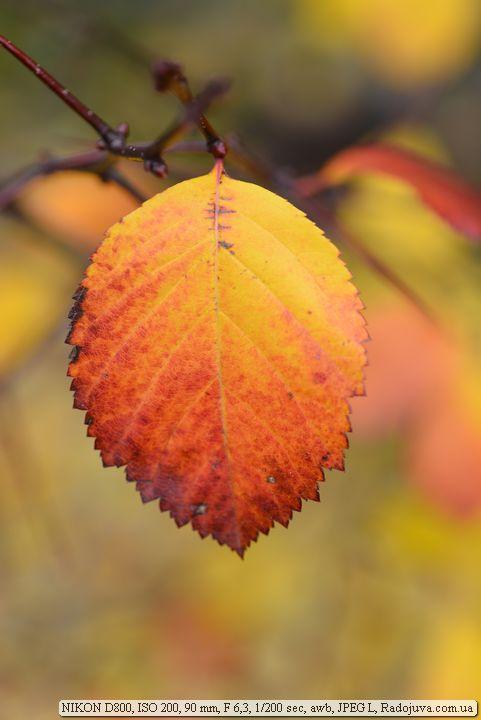 Осень фотограф