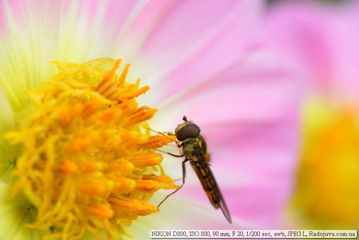 Пример фото на Nikon D 800