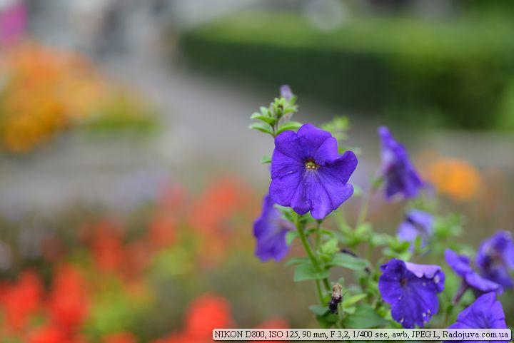 Пример фото на Nikon D800