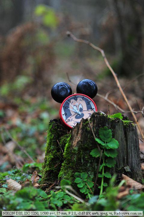 Пример фото на Nikon D3s