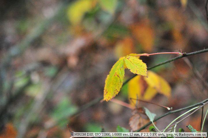 Пример фотографии на Nikon D3s