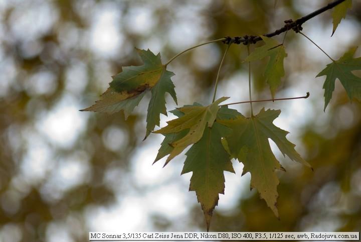 Пример фотографии на MC Sonnar 135 3.5
