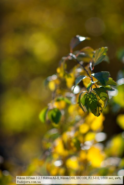 Фото на Nikon 105 2.5 AI