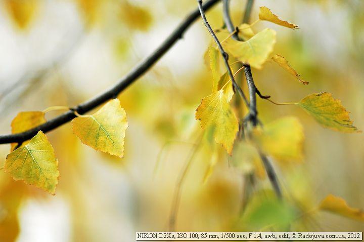 Пример фото на Nikon D2Xs