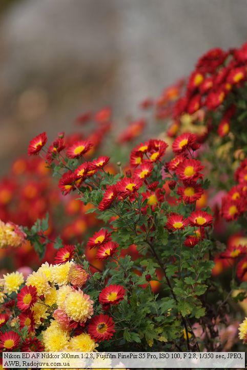 Пример фотографии на Nikon ED AF Nikkor 300mm f2.8