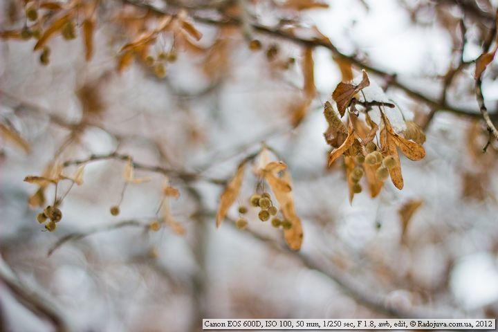 Пример фотографии на Canon EOS 600D
