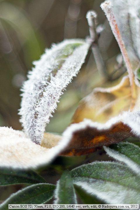 Пример фото на Canon 7D