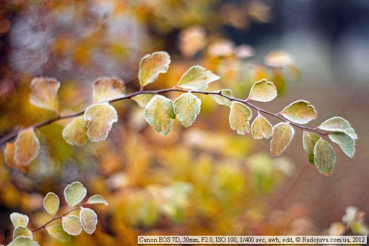 Пример фотографии на Canon EOS 7D