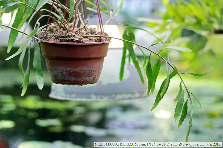 Пример фото на Nikon D3200