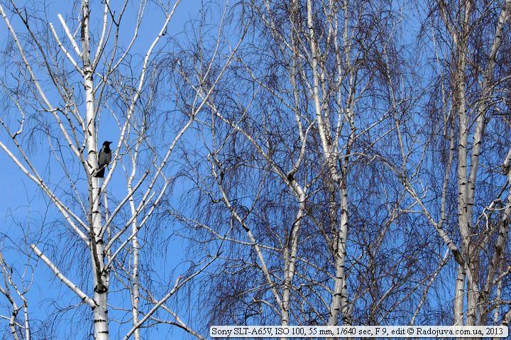 Пример фотографии на Sony SLT A65